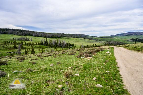 Long Meadows